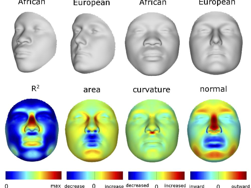 African to European face images