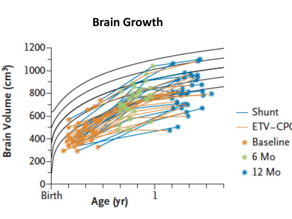 brain growth graph