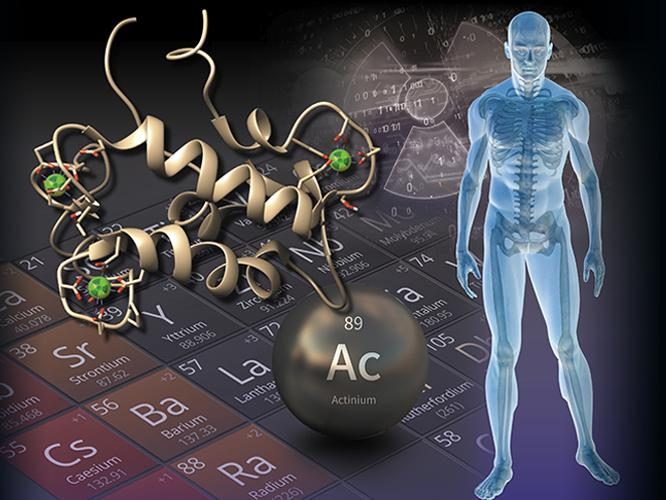 illustration of periodic table, actinium, protein, and human body
