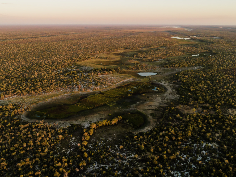 birds eye view of a forest, waterways and vegitation clearly visible.