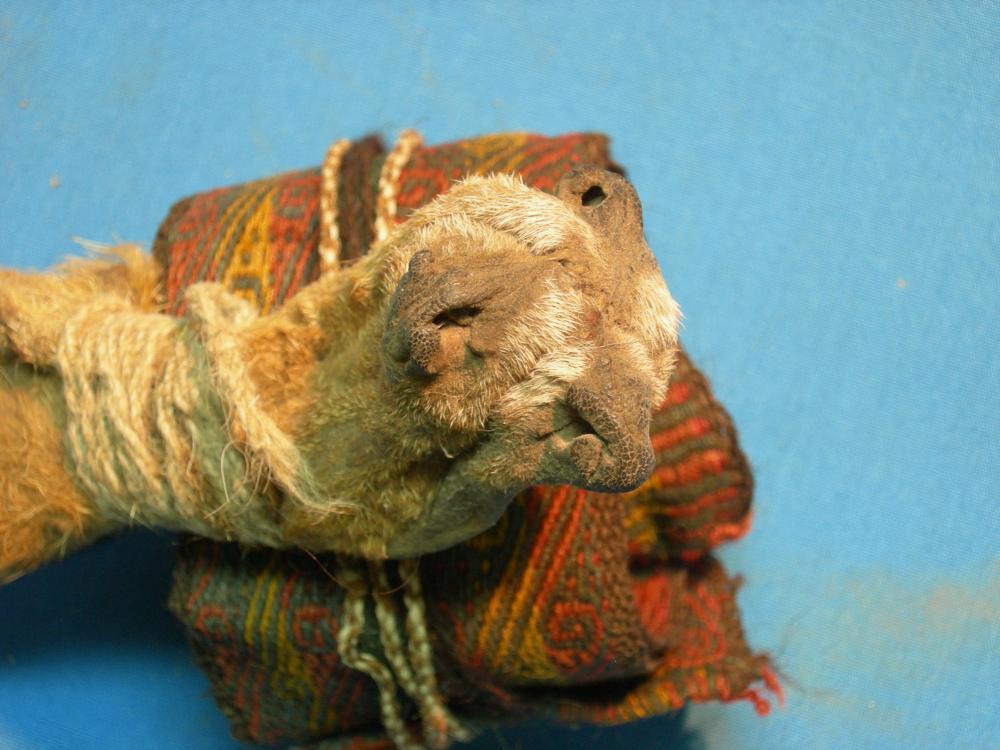 fox snout pouch