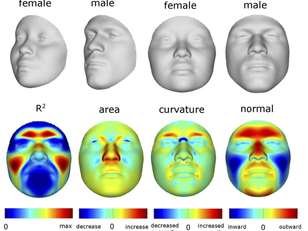 Male to female ration facial images