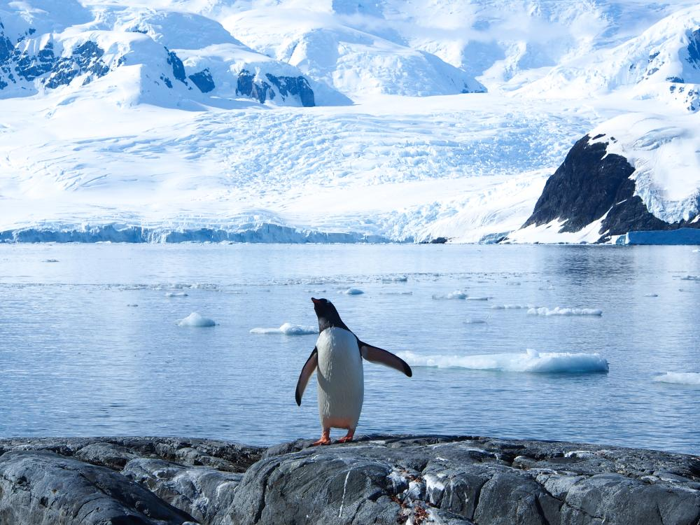 Penguin on an Antarctic glacier