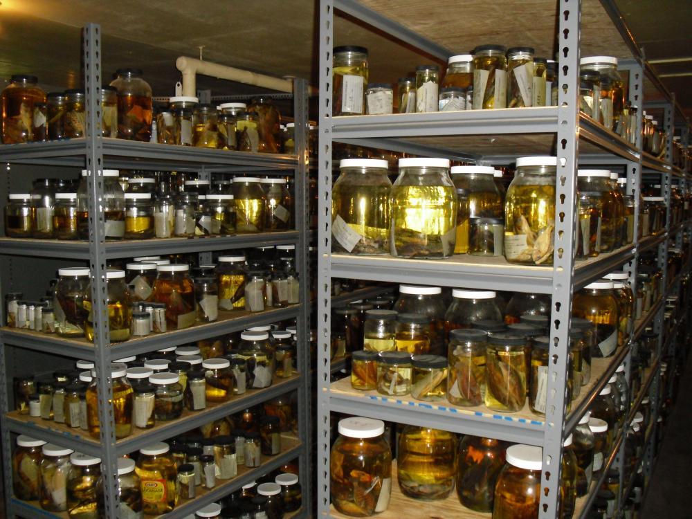 30,000 specimens
