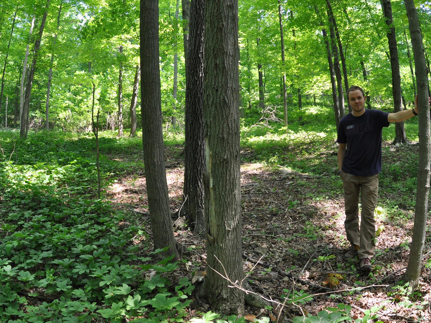 researcher with goldenseal