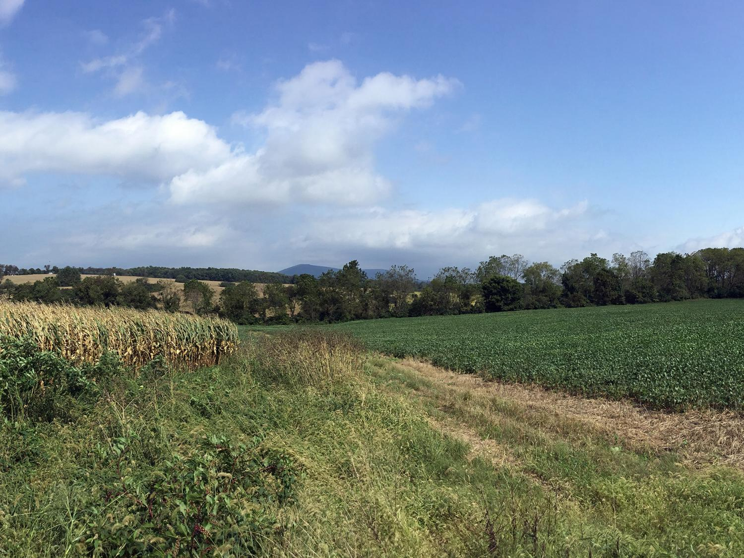 Panorama of Musser Gap with corn and soybean farms